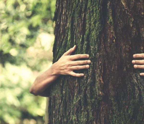 Les arbres ont une incroyable vie secrète que nous ignorons ...