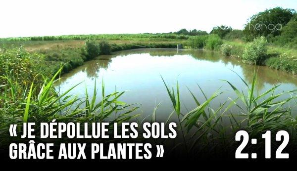 Dépolluer les sols avec des plantes - FUTURE - ARTE