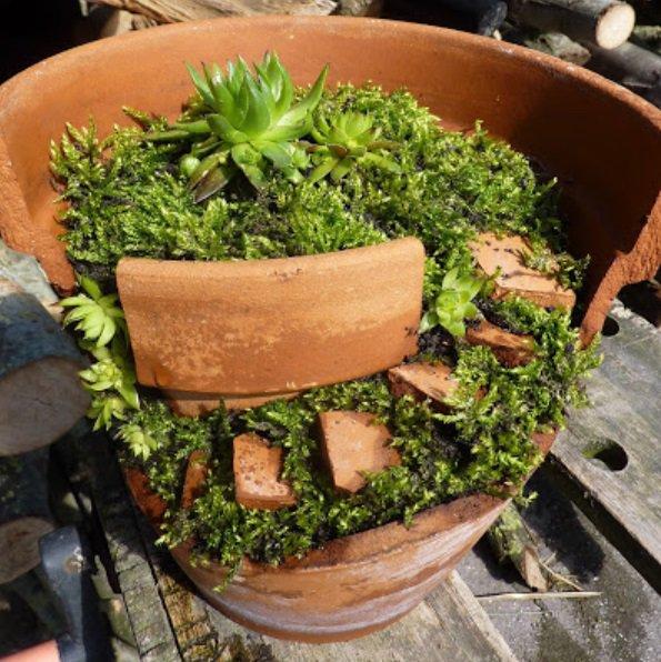 Des pots cassés qui deviennent de magnifiques jardins miniatures… À essayer, c'est facile !