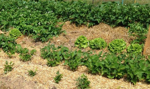 Quel est le meilleur paillage pour votre jardin ?