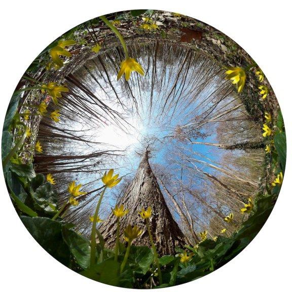 Pour un voyage poétique,  dans l'univers des jardins. Thomas DUPAIGNE, Photographe