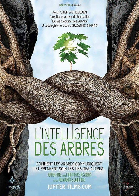 « L'intelligence des arbres » : un film qui révèle la vie secrète des forêts