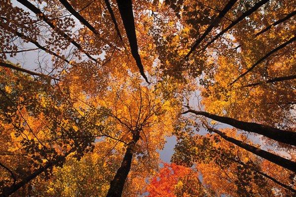Quand revient le vent de l'automne,  Je pense à tout ce temps perdu.  Je n'ai fait de mal à personne.  Je n'ai pas fait de bien non plus  Et j'ai le c½ur gros. ...
