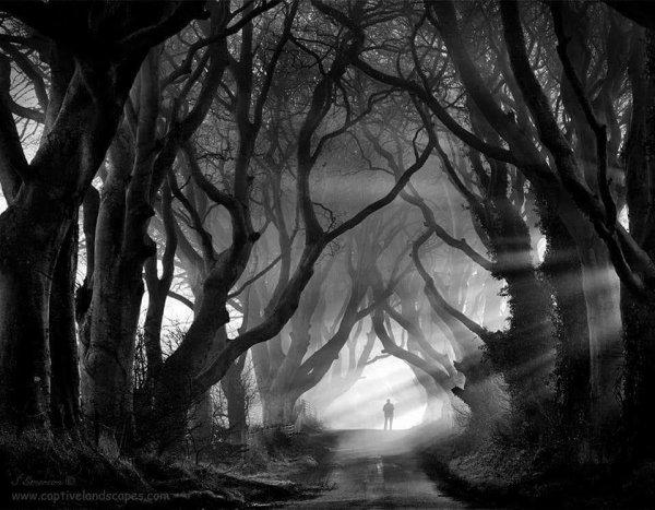 De Brocéliande au bois de nos instruments de musique : l'âme des arbres 23/12/2017