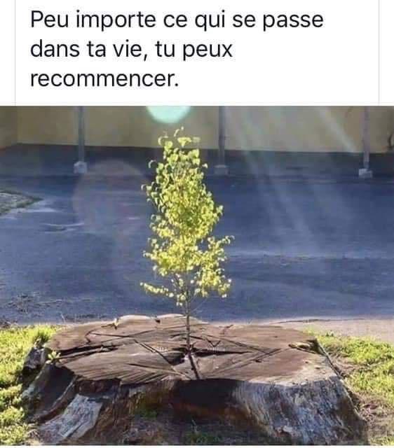 Plante un arbre ...