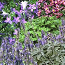 8.2 -Pelouses fleuries...Vive la biodiversité !
