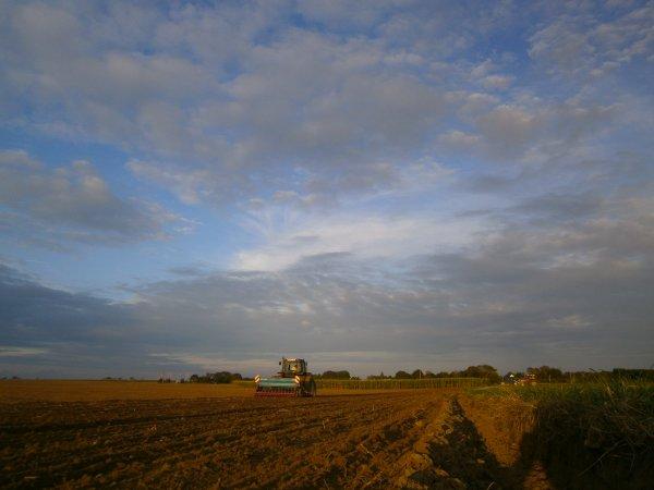 semis du ray grass