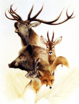 Ce dessin pour tous les chaseurs mister sanglier24 - Dessin de sanglier a imprimer ...