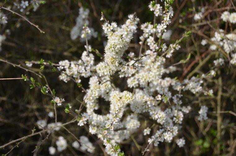 Flowers bring hope