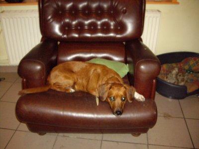 le chien de mon beaux pére