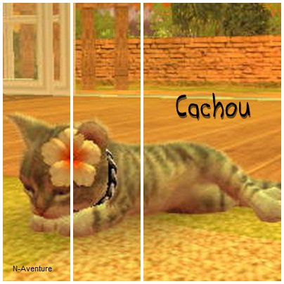 ★~Cachou~☆