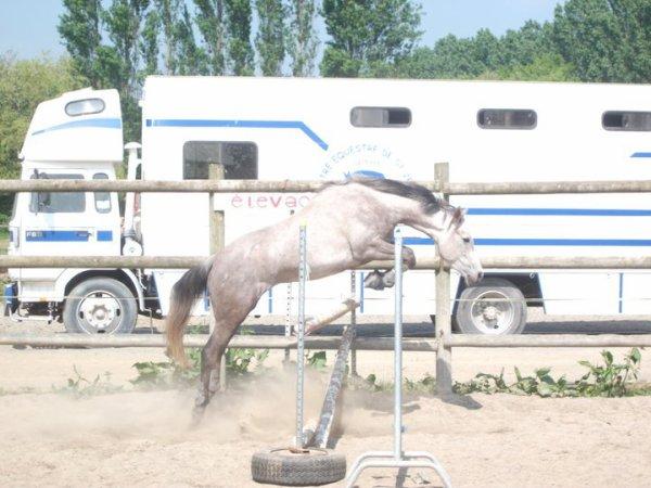 Jette ton coeur par dessus l'obstacle et ton cheval suivra