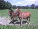 Photo de poney-club-du-marais
