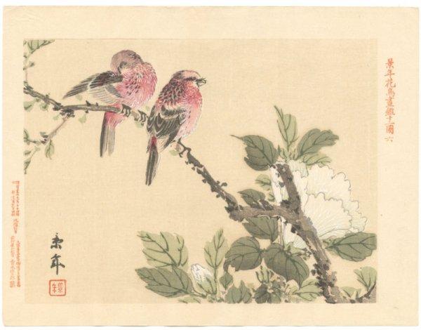 Estampe oiseau