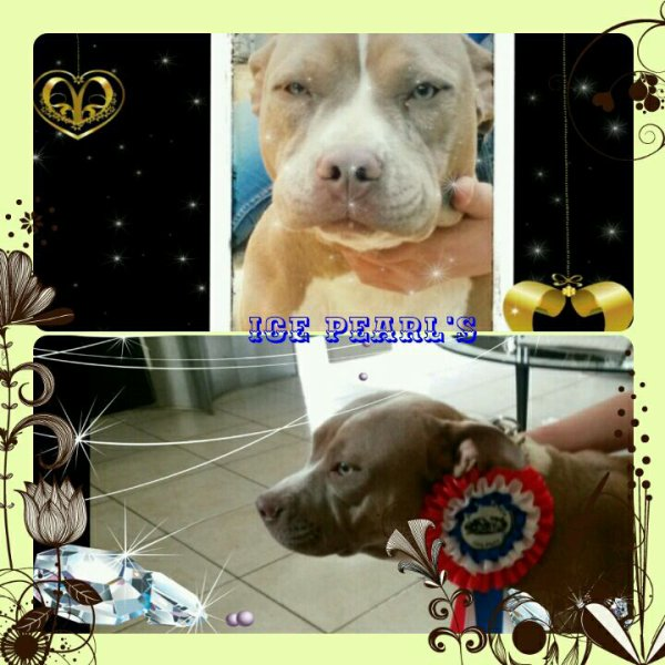 ICE PEARL'S  BULLY RED NOSE POCKET FILLE DIESEL