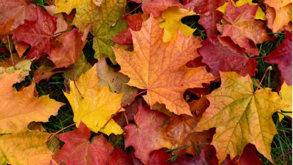 le début de l'automne . . .