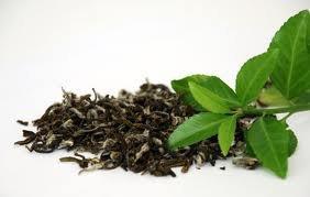 le thé vert : excellent pour la santé