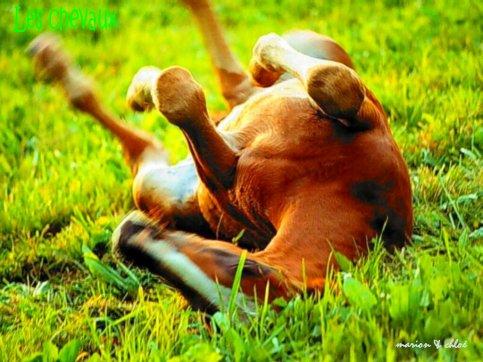 ♥Les chevaux♥