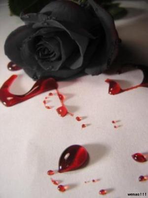 La Rosa Negra Los Cuentos De Hadas Y Los Finales Felices Si
