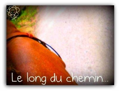 Le long du chemin...
