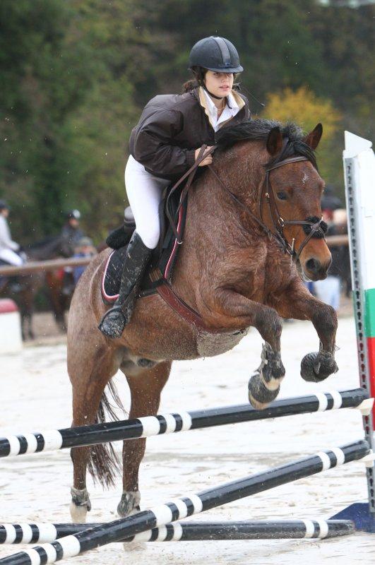 Bbé poney, le plus beau sans doute. ♥