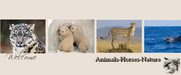 Bienvenues sur mon blog animalier !