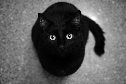 J'ai deux moyens d'oublier les problèmes : la musique et les chats.