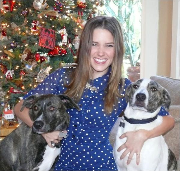 _ « Joyeux Noël tout le monde ! Les chiens de ma mère ont grandi, et ils sont prêts à dévorer  tous les cadeaux en dessous du sapin. :) » C'est le message et la photo qu'a posté Sophia sur son twitter le 25 décembre. _