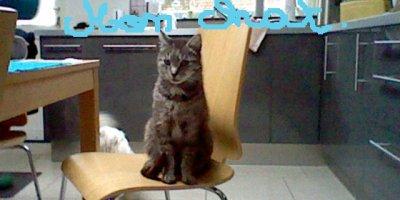 mon chat fait la pose (cheazzz)