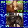 bounty-goundi