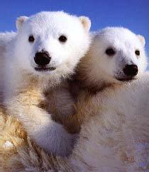 Les animaux polaires