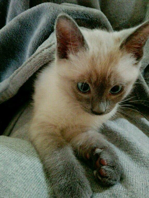 Leo mon chat d amour ?????