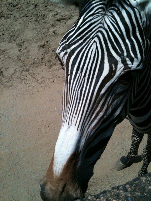 Le zoo c'est trop cool