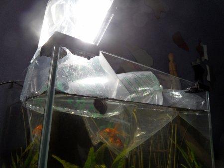 Mon nouvel aquarium : Mise en marche.