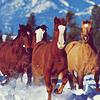il faut dire chevaux quand il y a plusieurs chevals...
