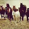 bientôt les pieds ferrés de leurs chevaux résonnèrent sur la terre durcie.
