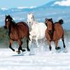 des chevaux aux jambes grêles et tendues, au cou dressé, au mors neigeux d'écume.