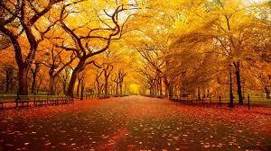 c l automne