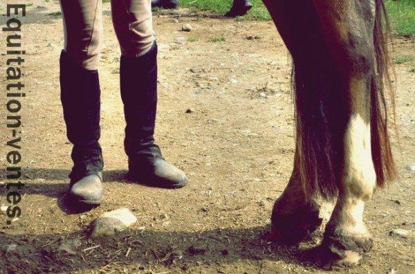 Affaires d'équitation à vendre.