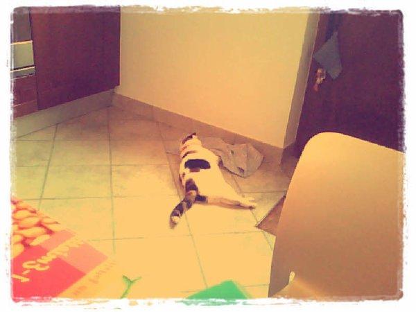 """mon chat d'amour """" Suzy """" !!"""