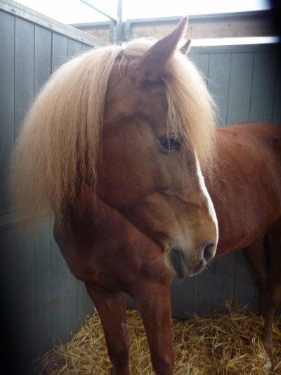 voila Kenya mon poney préferé je l'adore !