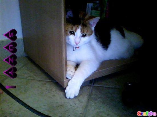 le plus beau des chats c'est Suzy !!
