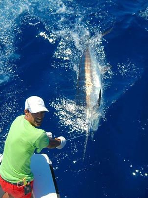 First blue for Nuno and Marco on Makaira Horta Azores.02 august 2013, Condor bank.