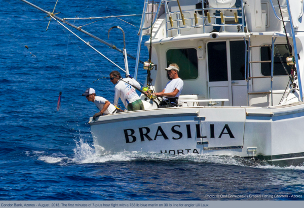 Report of the 17 august 2013 --------------------------- only Brasilia released a marlin today on Condor bank, Marty and Bill happy angler with a 550lbs ,first of the season