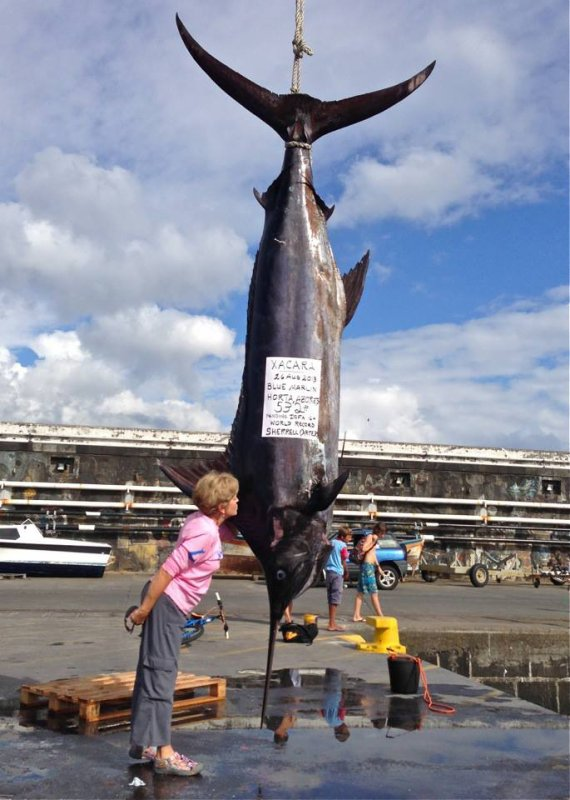 Sherrell Carter, new world record in 16lbs line, blue marlin 532lbs