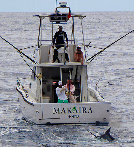 Report of the 30 august 2013 ---------------------------- All on Azores bank, festival of whites, Nola, Makaira released whites and Brasilia caught a nice 100kg yellowfin tuna.