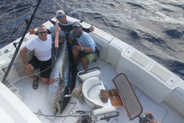 Report of the 19 september 2013 ------------------------------Brasilia, Nola Xacara, all on Azores bank. Lot's of activity with albacore, yellowfin, bluefin, bigeyes,white marlin, and blue marlin together. Xacara caught 4 albacore, Brasilia a white and good day for Nola with the Finland club, with 4 bites, first released a blue marlin 300lbs, second white marlin, number 3, a big tuna try to eat Bonze violator and finaly we caught a very nice bigeye tuna around 150 kg.