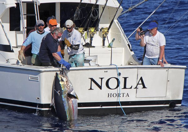 Thank you to all coming fishing with us.We are waiting for you in 2014.We start fishing in May for tuna.