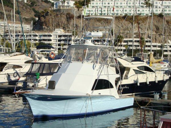 Incroyable , toutes les autorisations pour le charter commercial sont enfin réunies , on va pouvoir pêcher mais quelle épreuve difficile. Nell magic ,le carolina custom 36 est super prêt pour la nouvelle saison. Départ la magnifique marina de Pasito Blanco ,Gran Canaria.