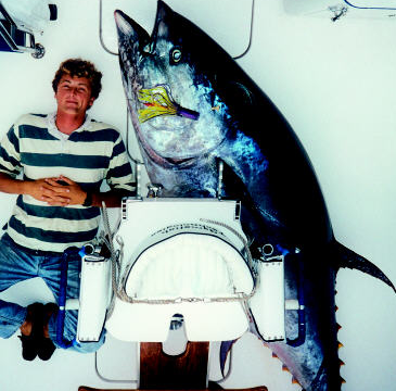 Big tunas, bluefin, yellow,bigeye are back in Horta Azores. Nice photos of the past.